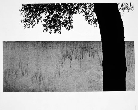 Árbol y tapia (Tree and Garden Wall)