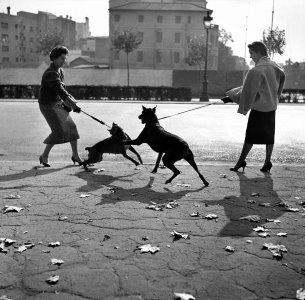 Paseando perros por la Diagonal (Walking Dogs on the Diagonal)