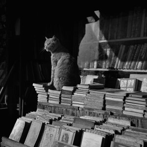 Libros de viejo con gato, Barcelona (Used Books with Cat, Barcelona)