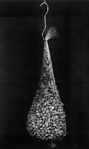 Untitled (Snails in a Bag)